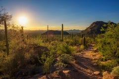 Puesta del sol sobre pista de senderismo en parque nacional de Saguaro en Arizona imagenes de archivo