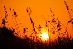 Puesta del sol sobre prado Fotografía de archivo libre de regalías