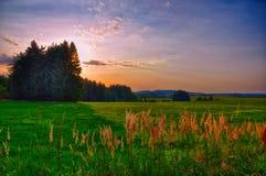 Puesta del sol sobre prado y árboles spruce en la tarde del verano, luz del sol, cielo, hierba verde Atmósfera de relajación Pais fotografía de archivo