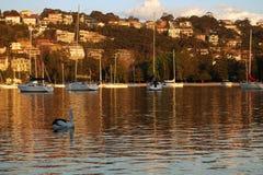 Puesta del sol sobre puerto en Sydney imagen de archivo libre de regalías