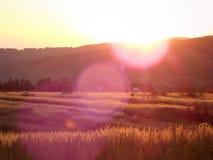 Puesta del sol sobre un campo fotos de archivo