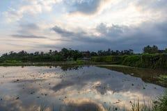 Puesta del sol sobre un campo del arroz después de la cosecha imagen de archivo