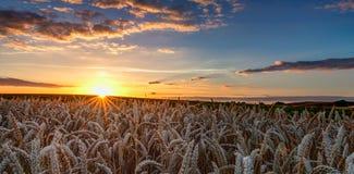 Puesta del sol sobre un campo de trigo Fotos de archivo libres de regalías