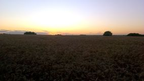 Puesta del sol sobre un campo del trigo Imágenes de archivo libres de regalías