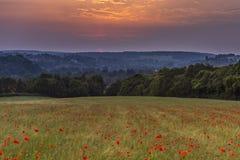 Puesta del sol sobre un campo hermoso de amapolas salvajes Imagen de archivo