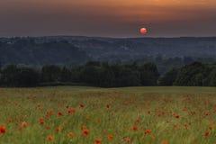 Puesta del sol sobre un campo hermoso de amapolas salvajes Foto de archivo libre de regalías