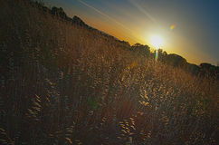 Puesta del sol sobre un campo o un prado Imagen de archivo libre de regalías