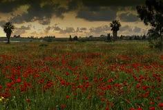 Puesta del sol sobre un prado de las amapolas Imágenes de archivo libres de regalías