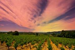 Puesta del sol sobre viñedo Imágenes de archivo libres de regalías