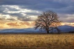 Puesta del sol solitaria del árbol Fotos de archivo libres de regalías