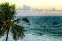 Puesta del sol suave detrás playa de un San Juan, Puerto Rico con una palmera Imagen de archivo