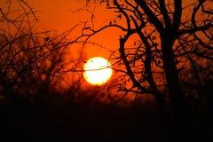 Puesta del sol surafricana Foto de archivo libre de regalías