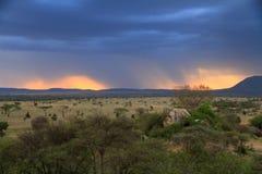 Puesta del sol tempestuosa sobre sabana africana Imágenes de archivo libres de regalías