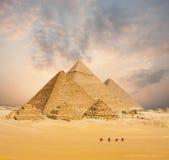 Puesta del sol todo el ancho distante de los camellos egipcios de las pirámides foto de archivo libre de regalías