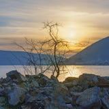 Puesta del sol tranquila con la silueta de un árbol que crece entre piedras Fotos de archivo libres de regalías