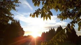 Puesta del sol a través de árboles Fotografía de archivo libre de regalías