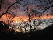 Puesta del sol a través de árboles de pacana Imágenes de archivo libres de regalías