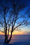 Puesta del sol a través de árboles deshojados en invierno Foto de archivo libre de regalías