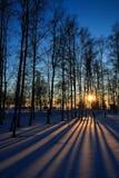 Puesta del sol a través de árboles deshojados en invierno Imagen de archivo