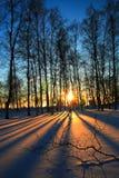 Puesta del sol a través de árboles deshojados en invierno Fotos de archivo libres de regalías