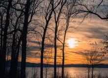 Puesta del sol a través de árboles en el lago Imagen de archivo