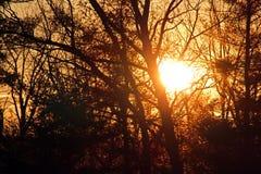 Puesta del sol a través de árboles en invierno Fotografía de archivo