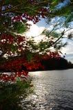 Puesta del sol a través de árboles de pino y del arce rojo en Adirondacks Imágenes de archivo libres de regalías