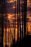 Puesta del sol a través de árboles quemados Foto de archivo