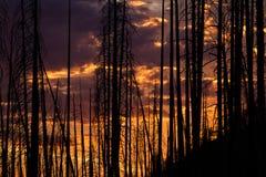 Puesta del sol a través de árboles quemados Fotografía de archivo
