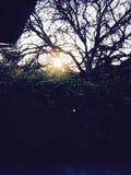 Puesta del sol a través de arbustos y de árboles Fotos de archivo