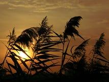 Puesta del sol a través de la hierba Foto de archivo libre de regalías