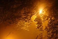 Puesta del sol a través de las hojas Fotografía de archivo libre de regalías