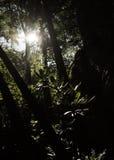 Puesta del sol a través de las maderas Foto de archivo