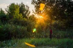 Puesta del sol a través de los árboles Imagen de archivo libre de regalías