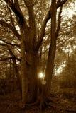Puesta del sol a través de los árboles Fotografía de archivo