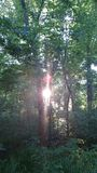 Puesta del sol a través de los árboles Fotografía de archivo libre de regalías