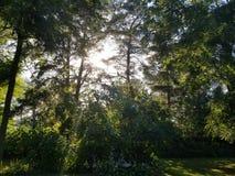 Puesta del sol a través de los árboles imágenes de archivo libres de regalías