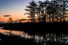 Puesta del sol a través de los árboles de los pantanos fotografía de archivo