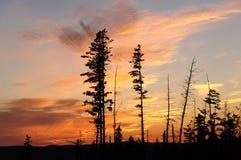 Puesta del sol a través de un canto silueteado del bosque Fotos de archivo