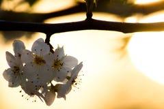 Puesta del sol a través del árbol Foto de archivo