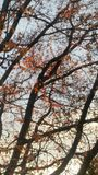 Puesta del sol a través del árbol Foto de archivo libre de regalías