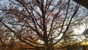 Puesta del sol a través del árbol Fotos de archivo libres de regalías