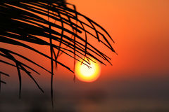 Puesta del sol a través del brunch de la palma Foto de archivo libre de regalías