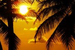 Puesta del sol tropical Fotos de archivo