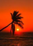 Puesta del sol tropical brillante Imagenes de archivo