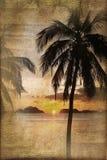 Puesta del sol tropical con las palmeras, proceso de la playa del vintage ilustración del vector