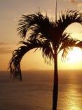 Puesta del sol tropical de la palmera Imagen de archivo libre de regalías