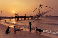 Puesta del sol tropical de la playa con los perros en la costa del océano Imágenes de archivo libres de regalías