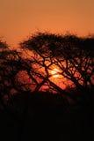 Puesta del sol tropical en arbusto africano fotos de archivo