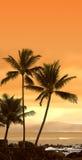 Puesta del sol tropical (foto del icono) Imágenes de archivo libres de regalías